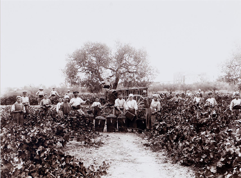 Camp de Tarragona. Veremadors   Vallvé Vilallonga, Hermenegild