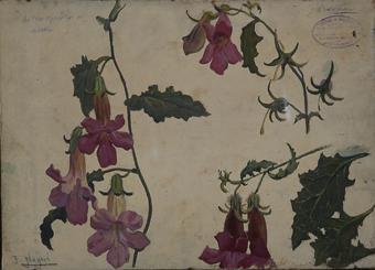 Plantes i flors | Nogué Massó, José