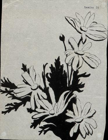 Apunt flors | Nogué Rovira, José