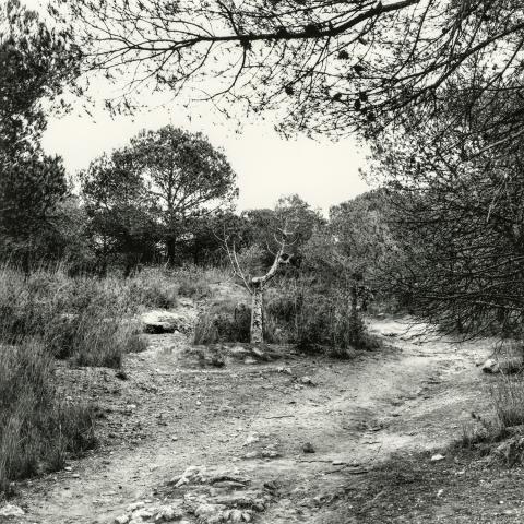 Zona Urbanització Els Pinars. Camí de la Budellera | Cornadó Serra, Ramon