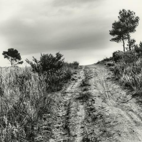 Zona Boscos de Tarragona | Cornadó Serra, Ramon