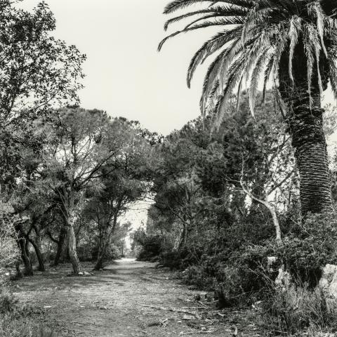 Mas de l'Àngel | Cornadó Serra, Ramon