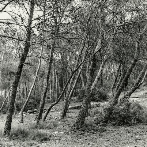 Zona Aqüeducte de les Ferreres | Cornadó Serra, Ramon