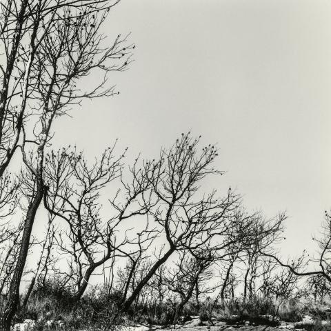 Bosc de Mas Cusidó | Cornadó Serra, Ramon