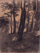 Paisatge bosc | Sancho Piqué, Josep