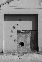 Diàlegs callats-111   Cornadó Serra, Ramon